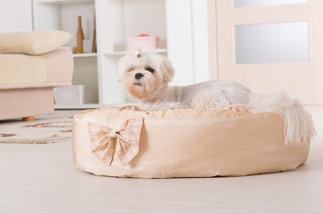 Objetos para higiene, segurança e alimentação devem compor a lista do enxoval para o cachorro