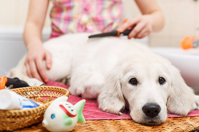 Itens de higiene não devem faltar na lista do enxoval para o cachorro