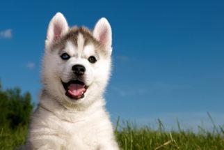 Fotos de cachorros: Veja fofinhos, filhotes, lindos e outros