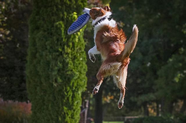 Jogo de cachorro tem que combinar com a raça e o temperamento do cão