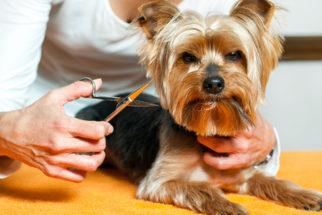 Cortar o pelo do cachorro ajuda a diminuir o calor?