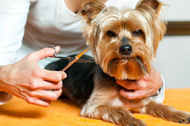 Cortar o pelo do cachorro ajuda a diminuir o calor no verão e nas épocas de temperaturas mais elevadas