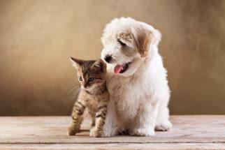 25 frases para fotos de cães e gatos juntos