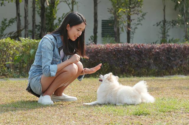 Segundo pesquisador, falar com cães faz bem para as pessoas que colocam em prática