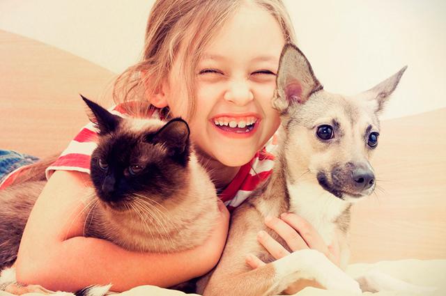25 Frases Para Fotos De Cães E Gatos Juntos Clube Para