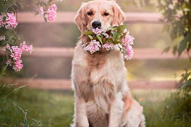 Cachorros Fofos Selecao De 50 Fotos Que Voce Ira Se Derreter