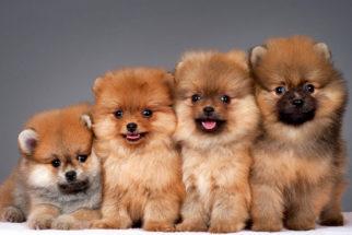 Cachorros fofos: seleção de 50 fotos que você irá se derreter