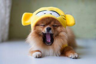 Os 20 cachorros mais fofos do mundo