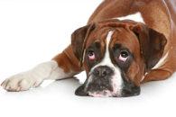 Carinha de cachorro pidão: 50 fotos de peludinhos super fofos