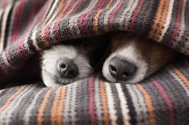 Dois cachorros dormindo com focinho a mostra