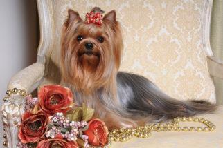50 nomes para cachorro fêmea