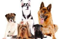 30 nomes engraçados para cachorros