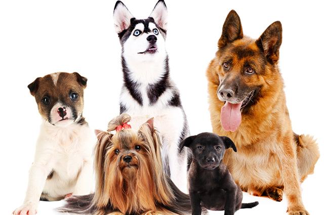 Cachorros de várias raças