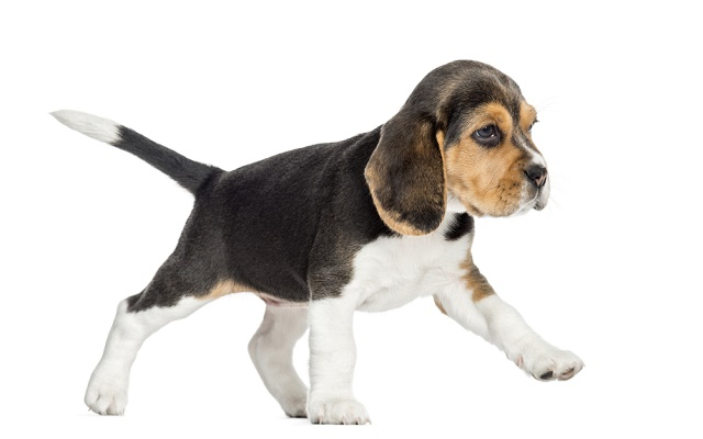 Cãozinho parado