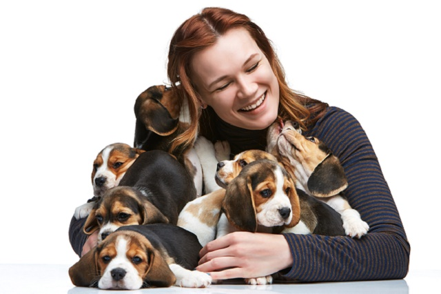 Mulher feliz com beagles filhotes