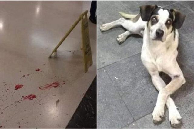 Imagens de sangue da cadelinha