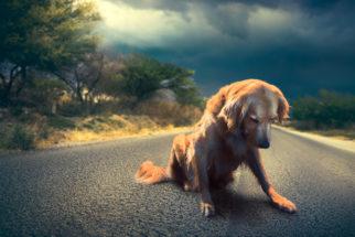 Dezembro verde: abandono de animais é crime