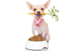 Oferecer ração ou alimentação natural: o que é melhor?