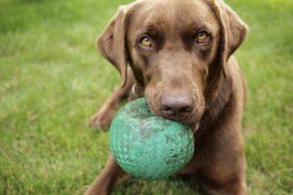 DIY: Brinquedos para cachorro