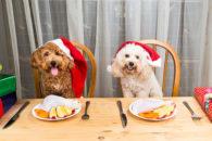 4 alimentos da ceia de Natal que fazem mal para o cãozinho